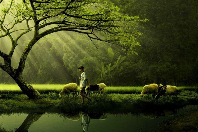 Pengertian Lingkungan Hidup Manfaat Macam Dan Cara Melestarikan