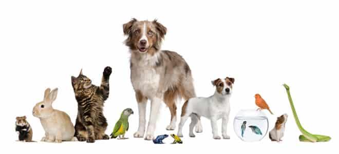 kumpulan jenis hewan peliharaan