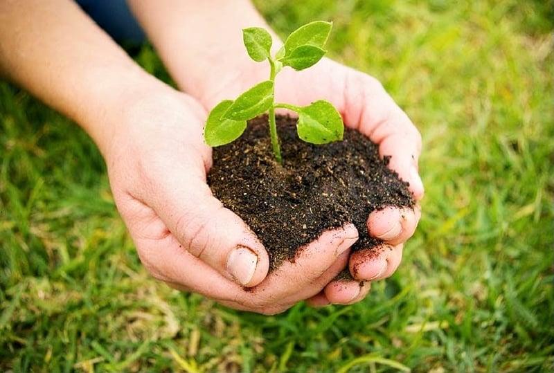 Pantun Nasehat Bertema Lingkungan