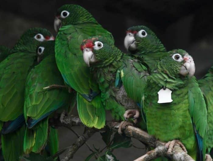 Beberapa Jenis Burung Beo Dengan Karakter Berbeda