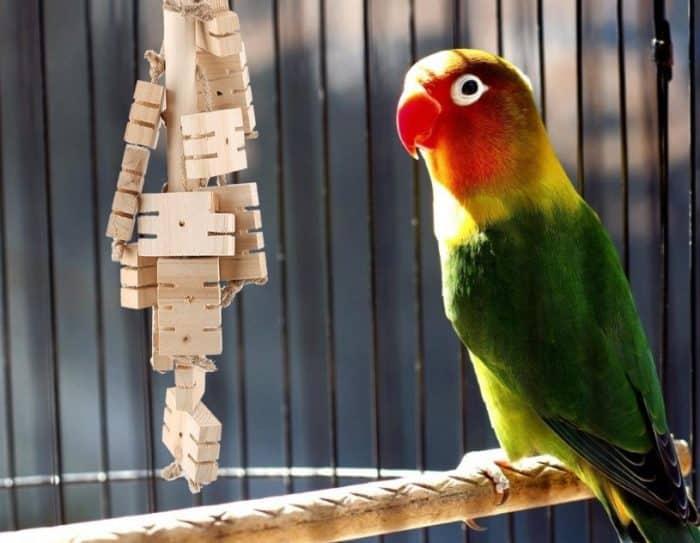 Cara Merawat Anak Burung Beo