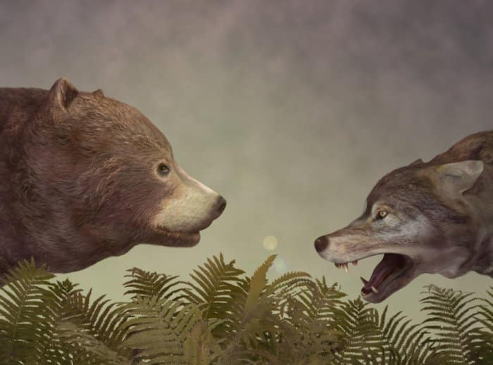 Dongeng Beruang yang Kelaparan