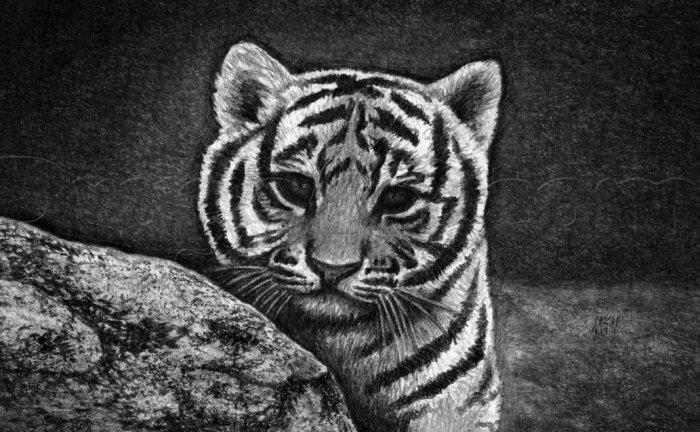 Dongeng Kancil, Tikus Harimau