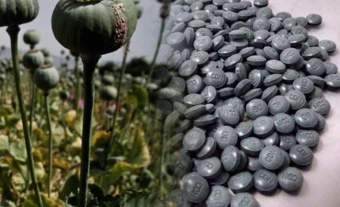 28 Jenis Narkoba dan Dampak Dari Penyalahgunaannya