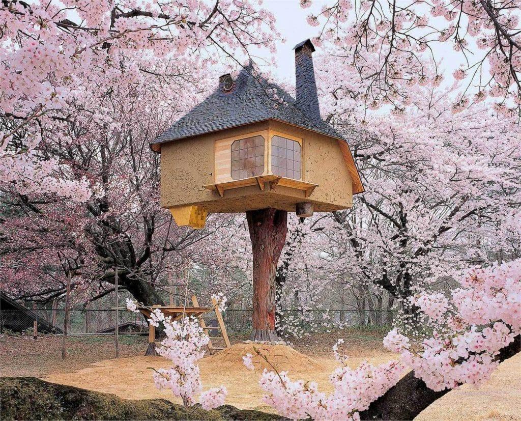 Rumah Pohon Tetsu, Hokuto, Jepang