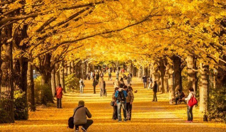 Rekomendasi Wisata yang Ada di Jepang